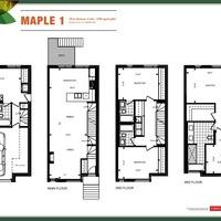 Medium maple 1 fp