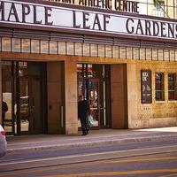 Medium maple leaf garden w800